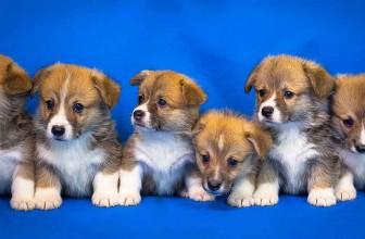 Virtual Pet Breeding Games